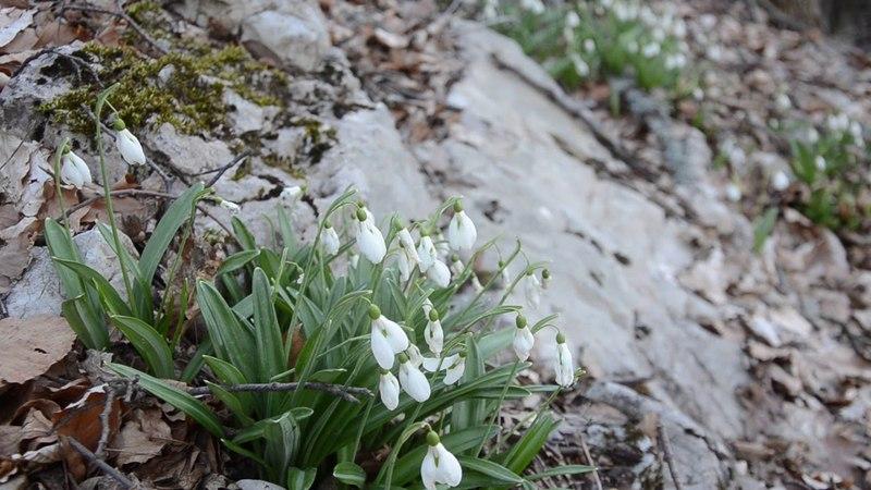 море подснежников белых поход апрель 1