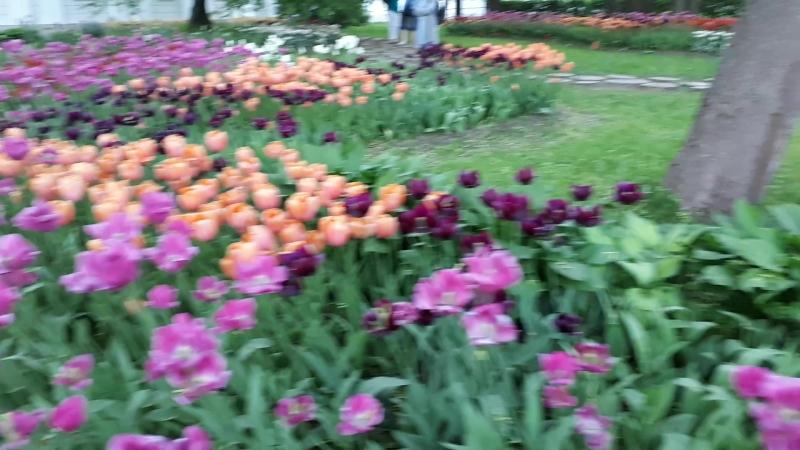 Елагин остров. Просто прогулка. Птички и тюльпаны. 27 мая 2018 г.
