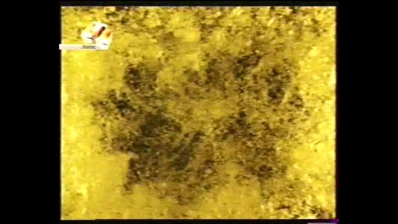 Реклама и анонс (СТС, 29.04.2008) 2