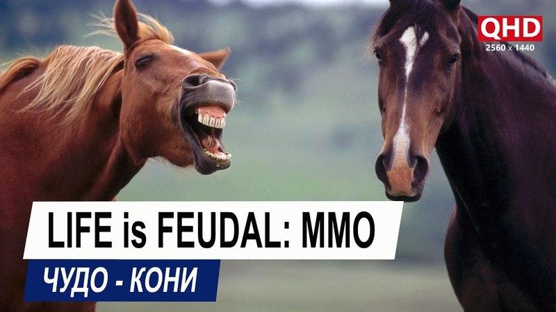 Life is Feudal: MMO - чудо-кони | MMORPG
