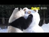 Новогодние поздравления от больших панд