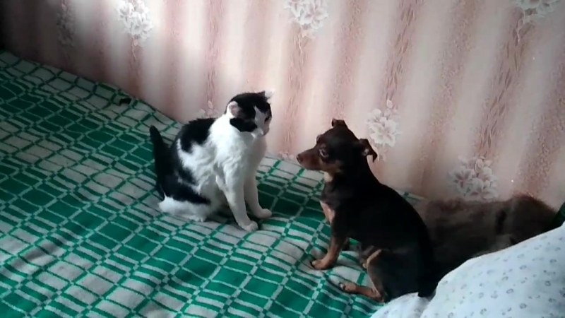 Бои без правил, без кота и жизнь не та, как кошка с собакой))