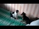 Бои без правил, без кота и жизнь не та, как кошка с собакой