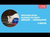 Прогноз кота Ахилла на матч Швеция-Швейцария. Онлайн-трансляция