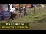 Животные, которых спасли из цирка (6 sec)