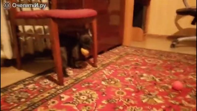 Собачка обожает картошку )