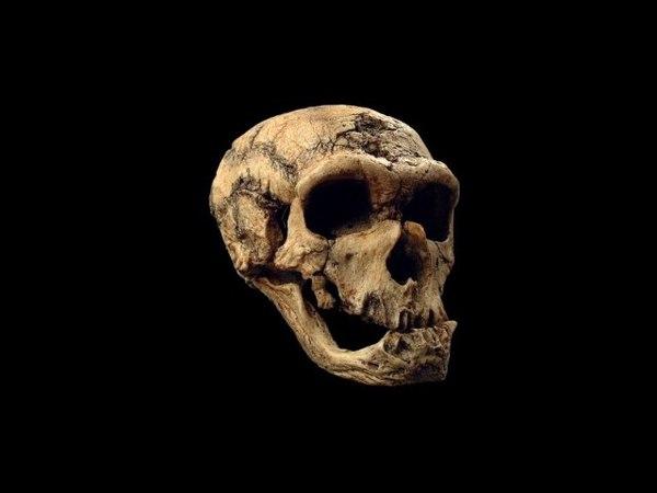 Происхождение и эволюция человека (рассказывает антрополог Мария Медникова) ghjbc[j;ltybt b 'djk.wbz xtkjdtrf (hfccrfpsdftn fynh