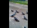 нашествие голубцов и смешные мы