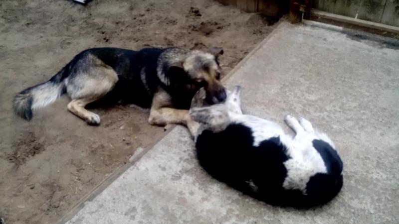 Амур и Малыш