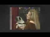 МОИ ЗАБАВНЫЕ ЖИВОТНЫЕ Говорящий пес Смешные и прикольные животные