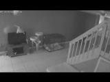 Смешное видео испуганных котов взорвало интернет