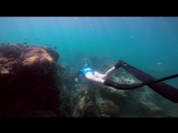 Freediving Koh Phangan