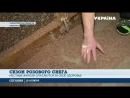 Экологическая катастрофа- Прилуки страдают от кукурузной шелухи