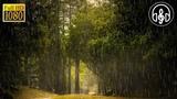 Шум Дождя, Раскаты Грома, Молнии, Пение Птиц в Лесу Без Рекламы Для Сна и Релакса 30 Минут