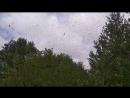 ЗЕЛЕНАЯ ЗОНА Роение пчел 1