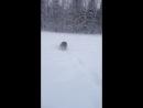 Шерстяная волчара