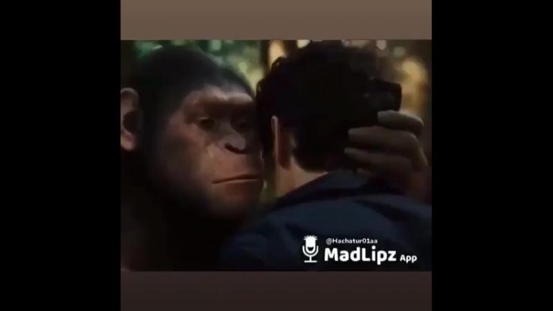Прикол с обезьяной 😹