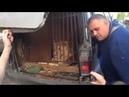 Кубанская львица 10 дней прожила в машине на стоянке