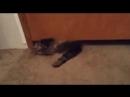 Коты как вода - везде просочится