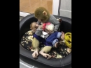 Bottle feeding a baby monkey