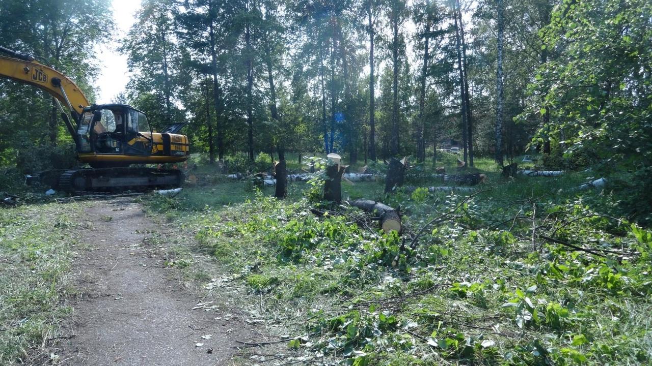 jjVdmMhEbCM - В городском парке уничтожают деревья, несмотря на заявление А. Курносова:
