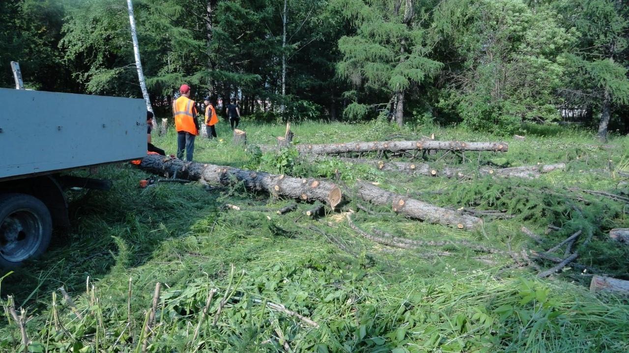 4 2KHEe9aU - В городском парке уничтожают деревья, несмотря на заявление А. Курносова: