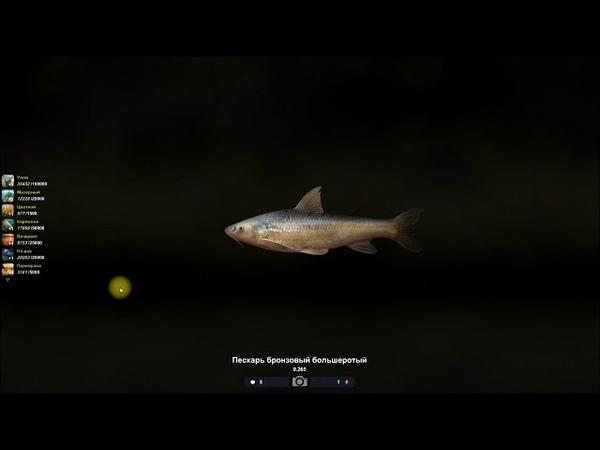 Трофейная рыбалка 2, рыбы Китая, Пескарь бронзовый большеротый