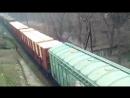 Из Украины в страны Европейского союза вывозят десятки вагонов древесины