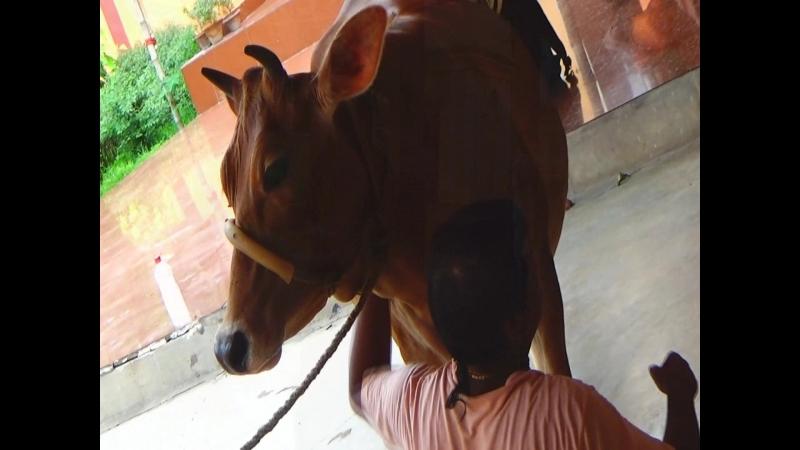 Маяпур, Ганга, дом святого Бхактивинода Тхакура