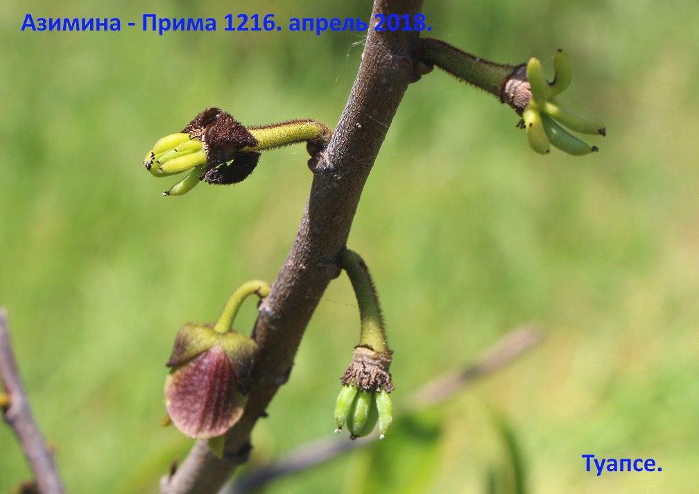 xvpQ9Hx8n8E.jpg