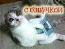Приколы с котами озвучка животных Айфон для кота Мурзика от Domi Show