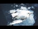 7 ЖИВОТНЫХ замороженных ВО ВРЕМЕНИ