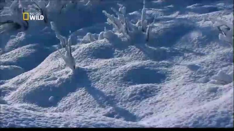 Дикие животные Севера Возрождение Зов природы Мастера выживания На краю