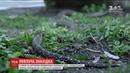 У Києві виявили рідкісну змію на дитячому майданчику