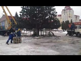 елку наряжают возле Звездного в Липецке