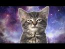 Новая песня Энджойкина про котиков_3