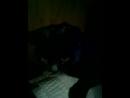 комната моей кошки