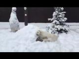 Дружба между с собакой по кличке Албай и тигром))