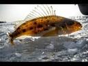 Рыбалка в Карелии зимой.