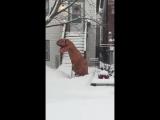 T-Rex на подработке
