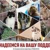 """Бездомные Животные г.Рязани """"Лучшие Друзья"""""""