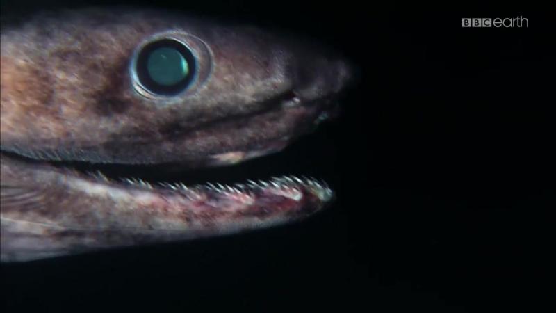 Thế Giới Bí Ẩn Của Cá Mập_1