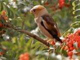 птицы певчие 11-часть помоги мне Аида Ведищева