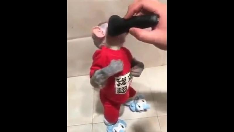 Побрили обезьяну Видели видео