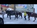 Норильск. Лошадки в городе.