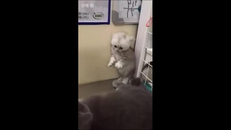 Котёнок Руди, а ну пошла нахуй, не не не руки проч, не трожте меня, пиздуйте лесом, Ебанутые ебанушки - из отбросов