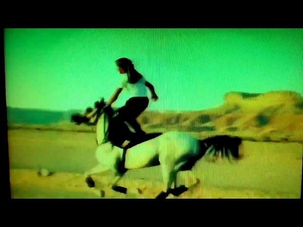 Amazing Egyptian Man Horse Rides
