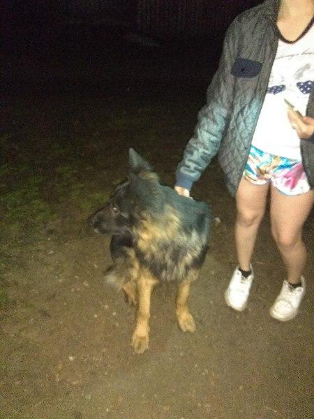 Кто потерял собаку?