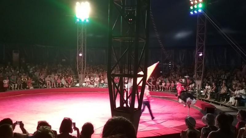 Цирк сафари 2018 страус отпад