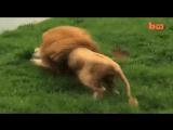 Ничего необычного, просто котик играет с мячом